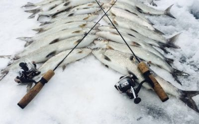 How to Fish For Whitefish